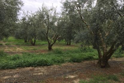Land for sale in Paralia Orfani, Kavala