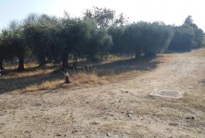 Οικόπεδο προς πώληση σε Λογκάρι, Σέρρες